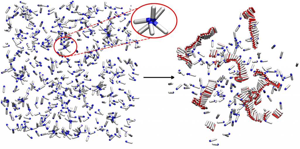 Simple computer model of amyloid aggregation at physiological concentrations. Left panel: Solution of amyloidogenic peptides. A peptide oligomer is circled in red. Right panel: Peptides aggregated in amyloid fibrils.